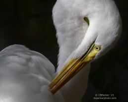 Preen - Florida Everglades 2015